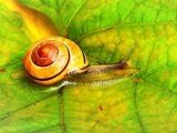 Snail Farm – αγοράσει, σχόλια, λειτουργεί