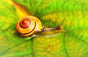 Snail Farm κριτικές